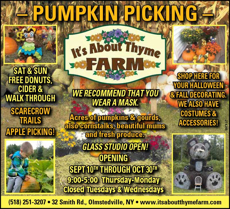 Mums Are Ready! Pumpkin Picking Starts Sept. 10th